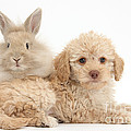 Puppy And Rabbit by Mark Taylor