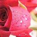 Rose by Gornganogphatchara Kalapun