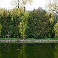 Willow Pond B And B by Cyryn Fyrcyd