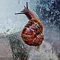 Garden Snail by Werner Lehmann