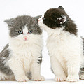 Kittens by Mark Taylor