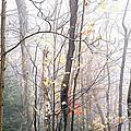 Autumn Monongahela National Forest by Thomas R Fletcher