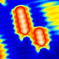 Spintronics Research, Stm by Drs A. Yazdani & D.j. Hornbaker