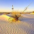 White Sands by Larry Gohl