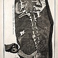 1726 Scheuchzer Homo Diluvii Testis by Paul D Stewart