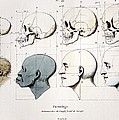 1760a Petrus Camper Facial Angle Eugenics by Paul D Stewart