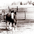 1900  Clydesdale Horse by Marcin and Dawid Witukiewicz