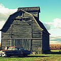 1950 Cadillac Barn Cornfield by Lyle Hatch