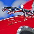1961 Jaguar Kougar Hood Ornament 2 by Jill Reger