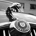 1963 Jaguar Mkii  by Paul Ward