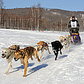 2010 Limited North American Sled Dog Race by Gary Whitton