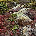 Acadia National Park by John Greim
