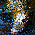 Alligator In Mississippi River by Paul Ge