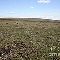 Alpine Tundra by Ted Kinsman
