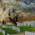 Arlington National Cemetary by Brian Jannsen