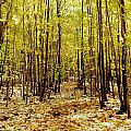 Autumn Trees by David Chapman