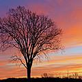 Bare Trees At Dawn by Dean Pennala