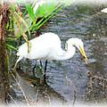 Beauty In The Swamp by Brenda Deem