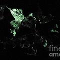 Bioluminescence by Dant� Fenolio