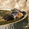 Bird Bath Fun Time by Lori Tordsen