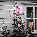 Bloom by Charles Stuart