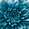 Blue Flower by Dawn OConnor