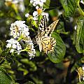Butterfly On Blooming Flowers by Manolis Tsantakis