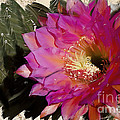 Cactus Flower  by Jim And Emily Bush