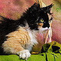 Calico Cat In Basket by Jai Johnson