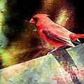 Cardinal  by Elaine Manley