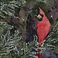 Cardinal by Sam Sidders