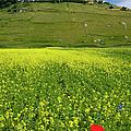 Castelluccio Umbria by Brian Jannsen