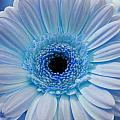 Cheeriest Blue by JAMART Photography