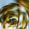 Circular Palm Blur by Vince Cavataio - Printscapes