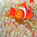 Clownfish by MotHaiBaPhoto Prints