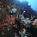 Colorful Reef Scene With Coral by Mathieu Meur