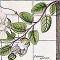 Colosseum: Flower by Granger