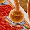 Coloured Sem Of Integrated Circuit Micro-wires. by Power And Syred