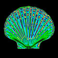 Coloured X-ray Of A Pecten Scallop Shell by D. Roberts