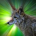 Coyote by Steve McKinzie