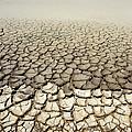 Cracked Mud by Detlev Van Ravenswaay