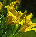 Daylilies by Brian Wright