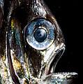 Deep Sea Hatchetfish by Dante Fenolio