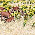 Deers by MotHaiBaPhoto Prints