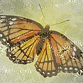 Designer Butterfly Collection by Debra     Vatalaro