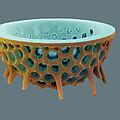 Diatom, Sem by David Mccarthy