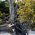 Driftwood On The Beach by Christiane Schulze Art And Photography