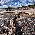 Driftwood by Steve Purnell
