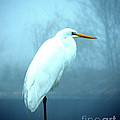 Egret by Lizi Beard-Ward