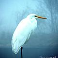 Egret by Lizi Beard-Ward